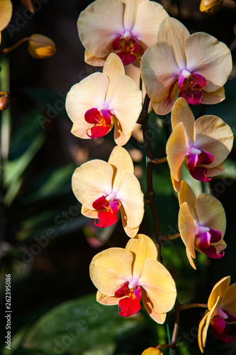beautiful orchids in a tropical garden - 262395086