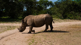 Africa, wild life, Baoboa, tree, Rhino,