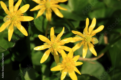 canvas print picture Spring boats - yellow flowers