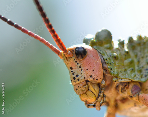 Insect in south africa close up - 262434035