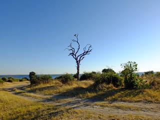 Botswana, Africa, Safari