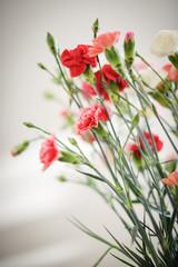 Fleurs d'oeillets