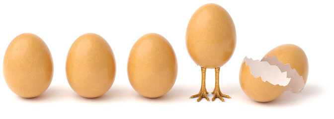 Row of chicken eggs. One egg with golden chicken feet and one Broken Egg Shell. isolated on a white background. © dimdimich