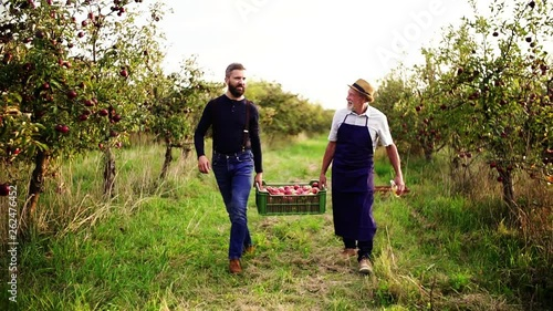 A senior man with adult son carrying apples in orchard in autumn.
