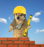 The dog builder in a safety helmet with a trowel and a level builds the brick wall. Sky background.