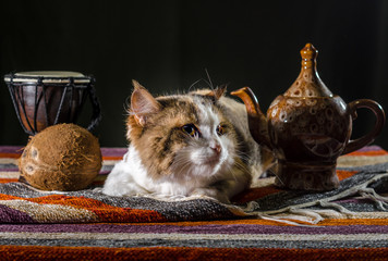 dissatisfied cat with a kettle drum djembe and coconut on a colorful carpet