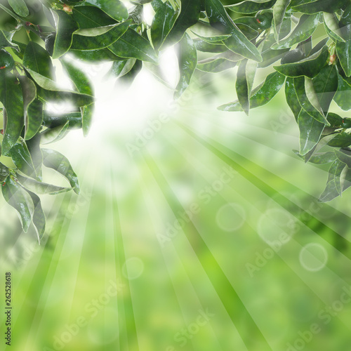 Green leaves with sunlight. Natural concept - 262528618