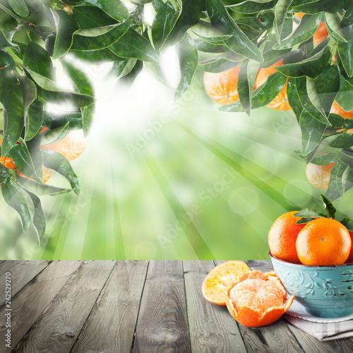 Tangerines on dark wooden table in Green garden. Fruits in plate - 262529270
