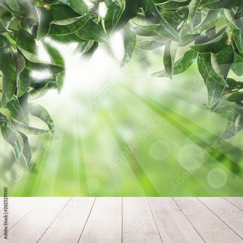 tangerines garden and wooden table with sunlight. Concept with mandarin leaves - 262529860
