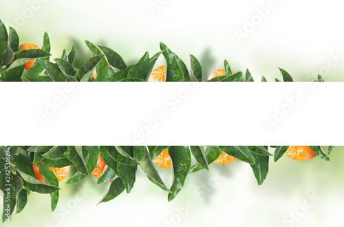 White banner on tangerines green leaves. Fruit concept with mandarin - 262531607