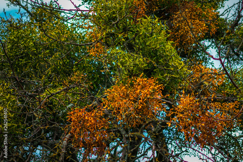 canvas print picture farbige Distel an Apfelbäumen