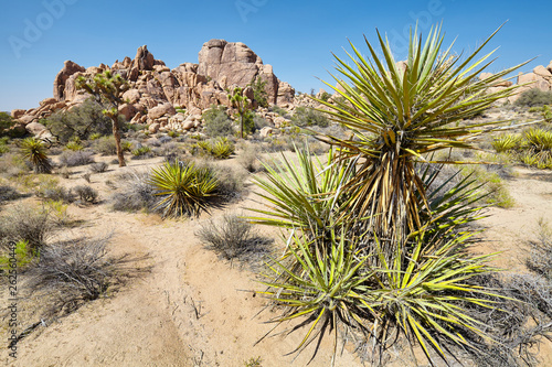 Wilderness of the Joshua Tree National Park, USA. © MaciejBledowski