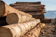cut down tree trunks in nature devastation deforestation