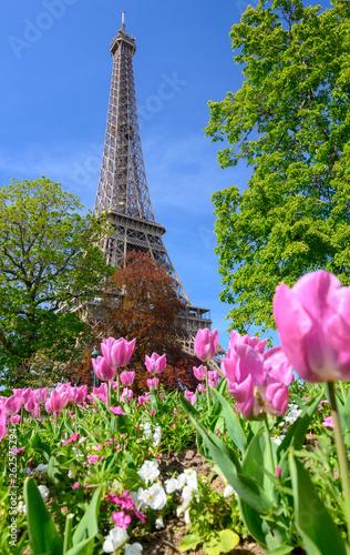La Tour Eiffel avec des arbres et des fleurs en premier plan sur fond de ciel bleu - 262575294