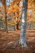 Quadro Autumn forest