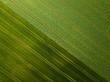 canvas print picture - Landwirtschaft - Feld von oben