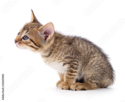 Kitten on white background. © Anatolii