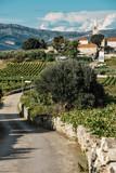 Lumbarda on Korcula Island Along the Dalmatian Coast of Croatia