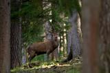 Ein kapitaler Hirsch mittem im Wald in der Brunftzeit