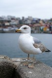 seagull on the background of the cityscape