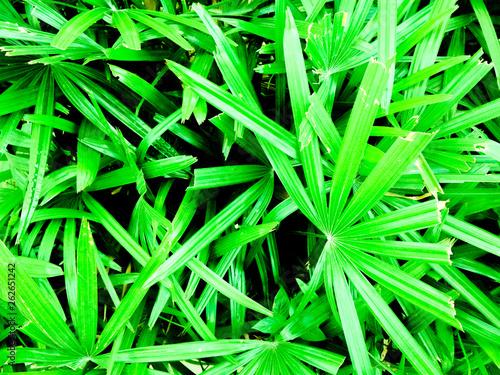 Leinwandbild Motiv background of green leaves