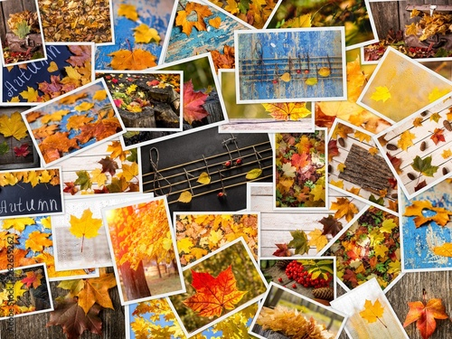 Colorful autumn collage. Autumn creative set of photos