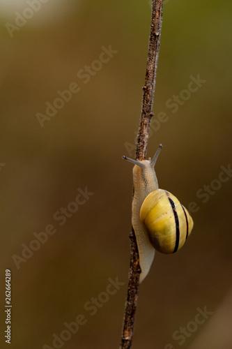canvas print picture Snails
