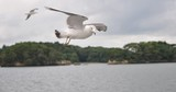Seagulls Flying on the Coastal Side in Japan