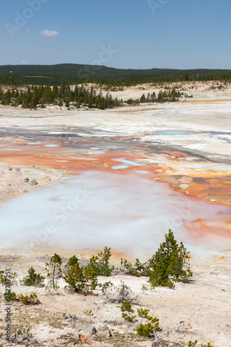 Fountain Paint Pot trail between gayser, boiling mud pools and burnt trees in in Yellowstone National Park  in Wyoming