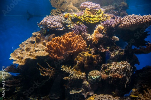 Coral & fishes, Red Sea