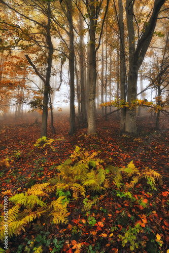 autumn forest. picturesque sunrise in the autumn forest. fairy forest