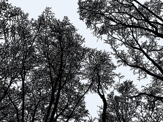 Vector image of trees silhouettes in the winter forest