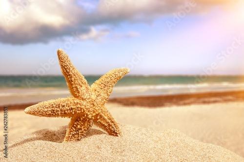 Close-up sea star on sandy beach at sunny day