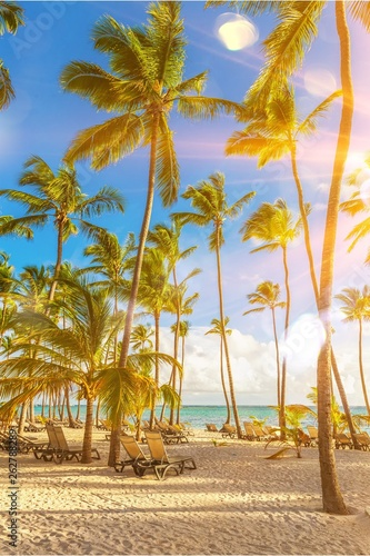 Beautiful tropical sand beach on island with coconut palm trees - 262788289