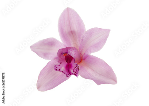 pink orchid isolated on white background - 262791873