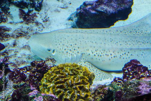 bright exotic motley fish