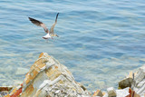 A seagull is flying over the coastal stones spreading its wings. Concept - vacation at sea