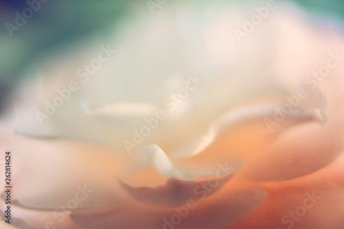 Soft Abstract Petals - 262814624