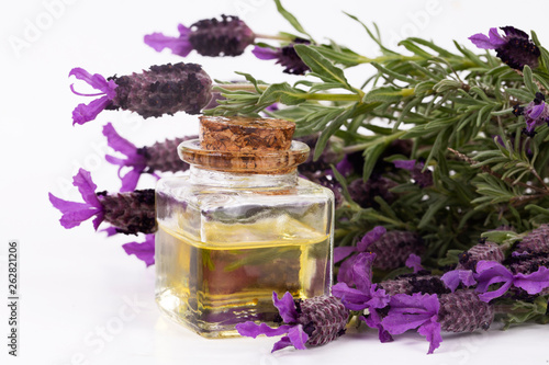 Lavandula Stoechas (French lavender; Spanish Lavender; Topped Lavender); isolated on white - 262821206
