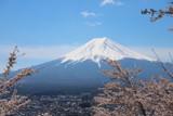 富士山と満開の桜