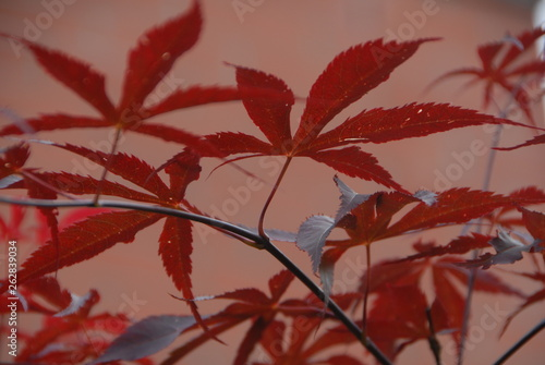 canvas print picture leaves