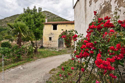Roses bloom on the walls of an abandoned house - 262870062