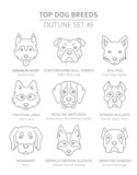Top dog breeds. Hunting, shepherd and companion dogs set. Pet outline collection