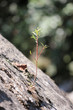 canvas print picture - kleines Bäumchen auf Fels gewachsen