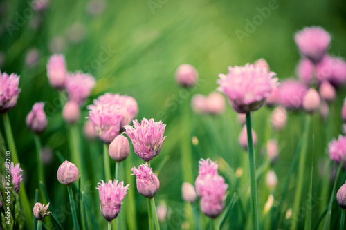 flowers in the grass close-up