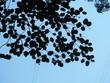 arbre ciel - 263076422