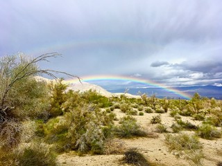 rainbow over desert vegetation © Kim