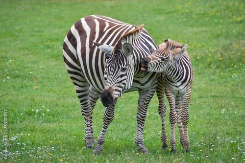 Very beautiful animals