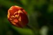 Leinwanddruck Bild - In Blütenstimmung