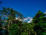 【静岡県伊豆半島ジオパーク】夏の西伊豆黄金崎【松林】